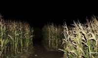 You wake up alone in a cornfield at night