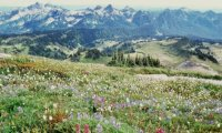 Mountain meadow vista