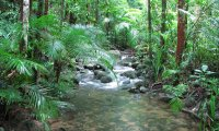 Take a Walk Along a Jungle River
