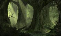 Ancient Ambience - Dark Swamp Forest