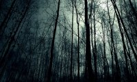 Lost in Slender Forest