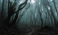 Haunted Forest on Hallows Eve