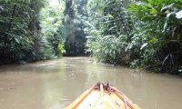 Paddling down the Amazon