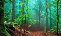 Peacefull forest lulliby