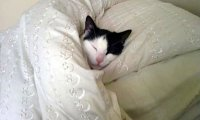 http://www.ambient-mixer.comSleeping with Your Cats