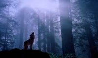 http://www.ambient-mixer.comwandering alone throught the rainy forest with wolves