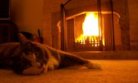 Cat's purrs by the fireplace