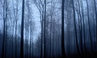 https://www.ambient-mixer.comHaunted Forest - Night