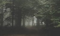 https://www.ambient-mixer.comHorror Forest