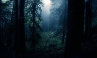 Darkwood Forest