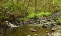 Relax beside a gurgle forest stream to relaxing harp music
